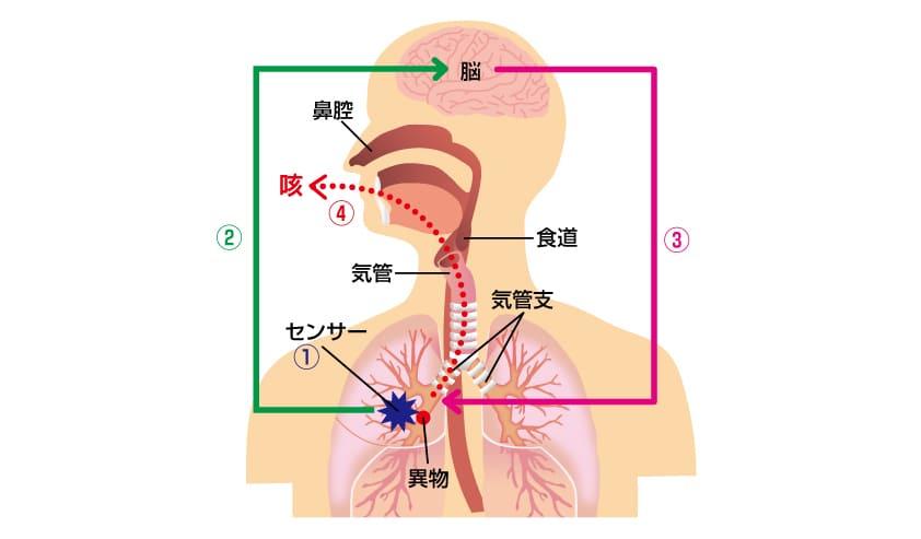 が 痛い 喉 咳 すぎ で の し みぞおちが長引く咳で痛いときに考えられる原因と受診すべき病院